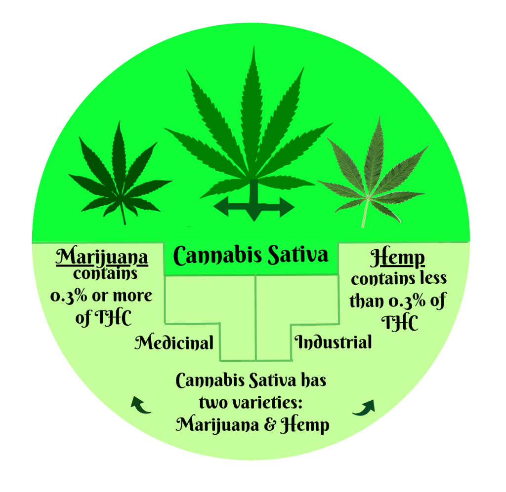 https://blog.arizonacriminaldefenselawyer.com/files/2019/09/Cannabis-v.-marijuana-3-1024x997.png